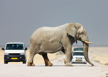 self-drive-safaris